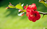 Red Flowers With Thorns  30 Hd Wallpaper
