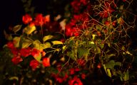 Red Flowers With Thorns  33 Background Wallpaper