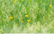 Small Yellow Flowers In Yard  20 Cool Hd Wallpaper