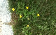 Small Yellow Flowers In Yard  9 Cool Hd Wallpaper