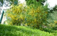 Tree Yellow Flowers Uk  31 Hd Wallpaper