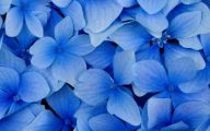 Wallpaper Flowers Blue  7 Hd Wallpaper