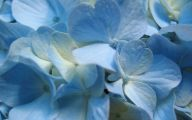 Wallpaper With Blue Flowers  30 Background