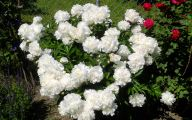 White Flowers For Bouquets  19 Desktop Background