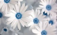 White Flowers For Bouquets  3 Background Wallpaper
