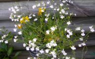 White Flowers For Hanging Baskets  14 Free Hd Wallpaper