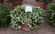 White Flowers For Hanging Baskets  16 Hd Wallpaper