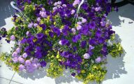 White Flowers For Hanging Baskets  19 Widescreen Wallpaper