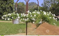 White Flowers For Hanging Baskets  26 Background