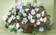 White Flowers For Hanging Baskets  3 Cool Wallpaper