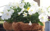 White Flowers For Hanging Baskets  30 Background Wallpaper