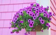 White Flowers For Hanging Baskets  31 Wide Wallpaper