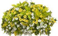White Flowers For Hanging Baskets  4 Desktop Wallpaper