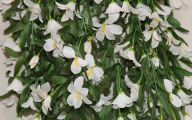 White Flowers For Hanging Baskets  9 High Resolution Wallpaper