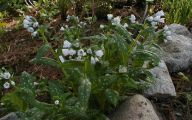 White Flowers For Shade Garden  18 Widescreen Wallpaper
