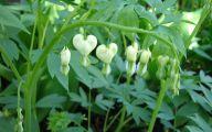 White Flowers For Shade Garden  8 Background Wallpaper