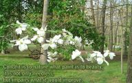 White Flowers Images With Quotes  15 High Resolution Wallpaper