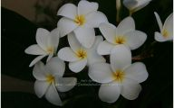 White Flowers Names And Images  11 Hd Wallpaper