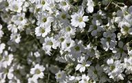 White Flowers Names And Images  4 Widescreen Wallpaper