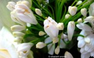 White Flowers Names And Images  7 Widescreen Wallpaper