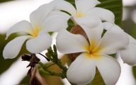 White Flowers Names And Images  8 Hd Wallpaper