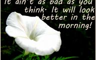 White Flowers Quotes  11 High Resolution Wallpaper