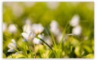 White Flowers Quotes  12 Cool Wallpaper