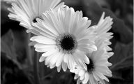 White Flowers Quotes  4 Hd Wallpaper