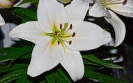 White Flowers Quotes  6 Desktop Wallpaper