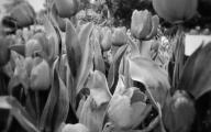 White Flowers Tumblr  6 Widescreen Wallpaper