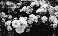 White Flowers Tumblr  9 Desktop Wallpaper