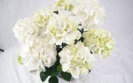White Knight Flowers  20 Desktop Background
