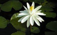 White Knight Flowers  31 Free Hd Wallpaper