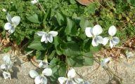 White Yard Flowers  15 Background