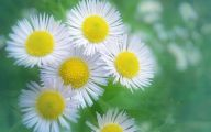 White Yellow Flowers  16 Widescreen Wallpaper