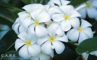 White Yellow Flowers  4 Free Hd Wallpaper