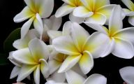 White Yellow Flowers  9 Free Wallpaper