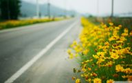 Yellow Flowers Roadside  13 Desktop Background