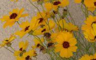 Yellow Flowers Roadside  24 Background Wallpaper