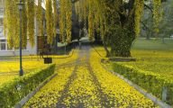 Yellow Flowers Roadside  30 Cool Wallpaper