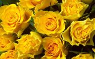 Yellow Flowers Roses  28 Background Wallpaper