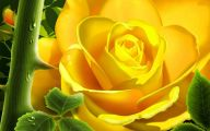 Yellow Flowers Roses  33 Free Wallpaper