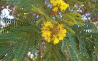 Yellow Flowers Tree  32 High Resolution Wallpaper