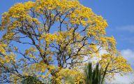 Yellow Flowers Tree  34 Desktop Wallpaper