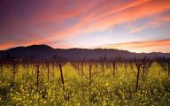 Yellow Flowers Vineyards  26 Widescreen Wallpaper