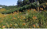 Yellow Flowers Vineyards  29 Free Hd Wallpaper