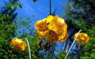 Yellow Flowers Wallpaper  14 Background Wallpaper