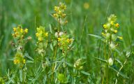 Yellow Garden Flowers Uk  17 Hd Wallpaper