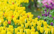 Yellow Garden Flowers Uk  4 Cool Hd Wallpaper