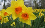 Yellow Spring Flowers Uk  2 Desktop Background
